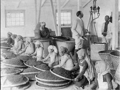 Women Workers Cleaning Tea Leaves in Factory in Darjeeling, India 1865